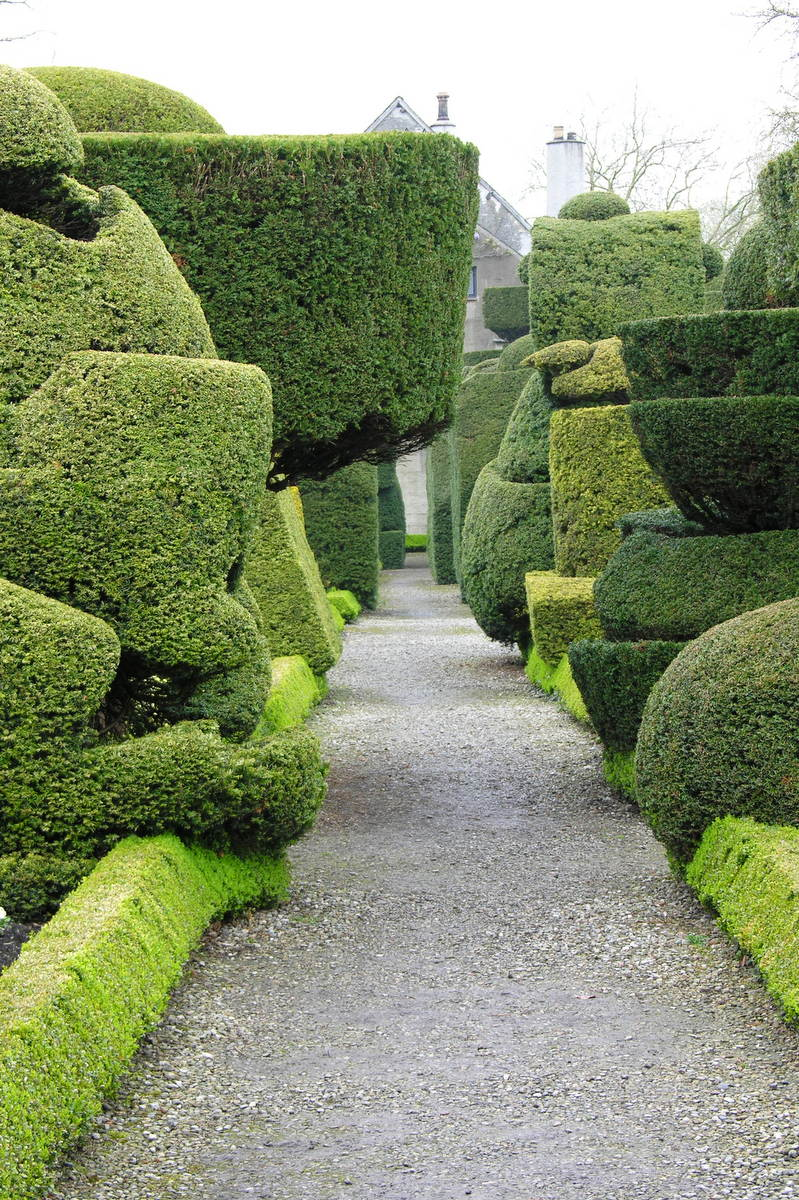 Topiary w Levens Hall.