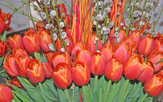 Wystawa tulipanów w Warszawie