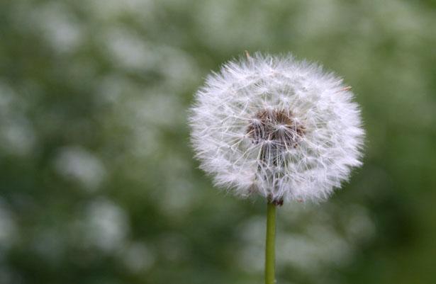Pyłki roślin w twoim ogrodzie