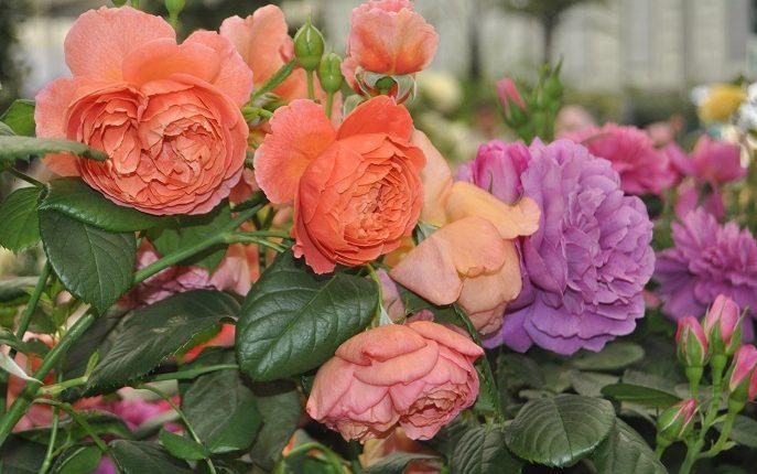 Poetycki czar róż