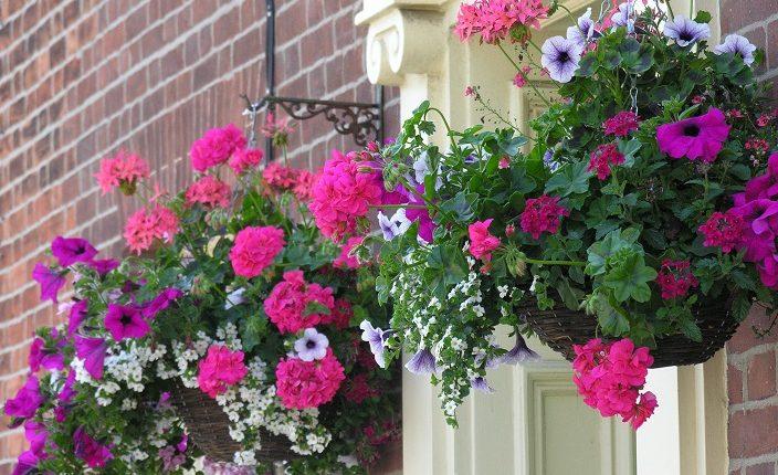 Kwiaty balkonowe – co zrobić, żeby były piękne