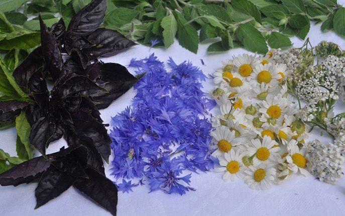 Aromatyczne zioła na zimę