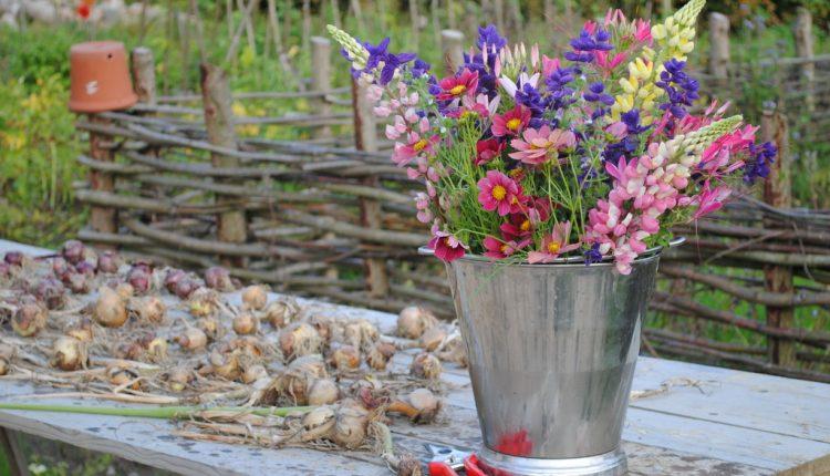 Z ogródka do wazonu