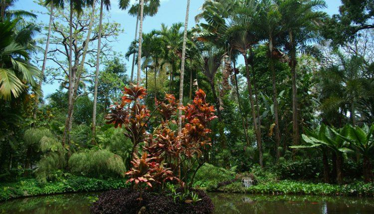 Aloha – witajcie w tropikalnym raju