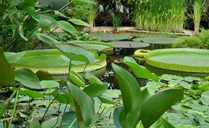 Ogród Botaniczny w Oksfordzie
