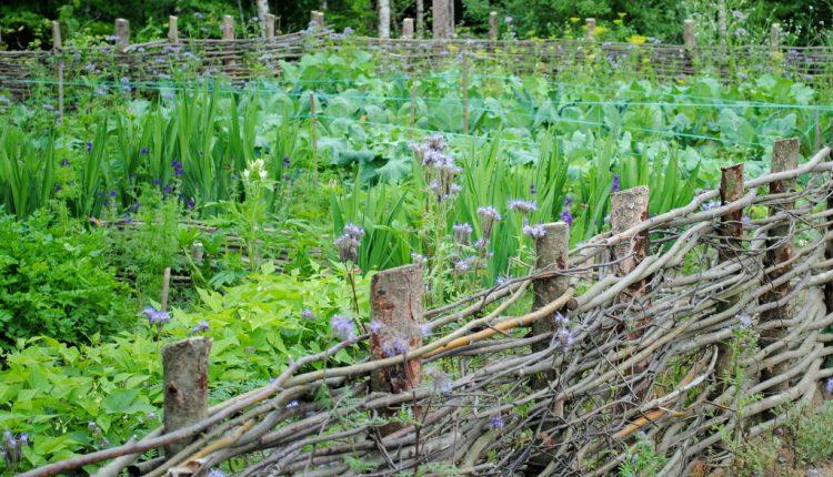 Czy uprawa współrzędna jest sposobem na zdrowe plony?