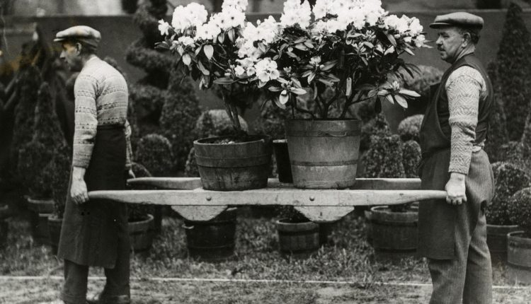 100 lat Chelsea Flower Show