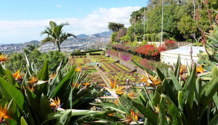 Ogród Botaniczny na Maderze