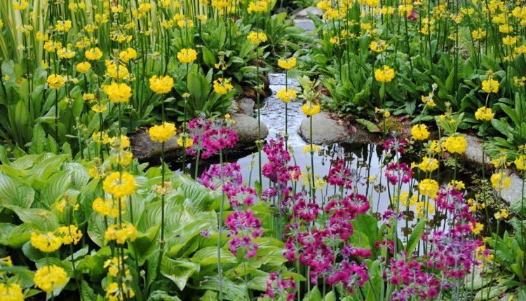 Bajkowe ogrody Trebah w Kornwalii