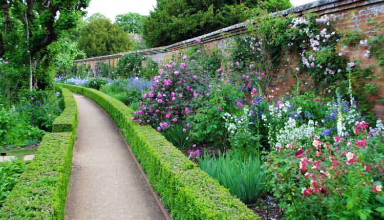 Kolekcja starych angielskich róż w Mottisfont