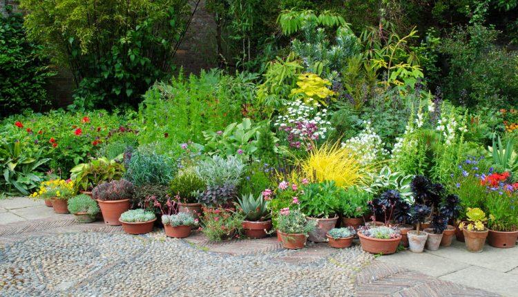 Ogródek bylinowy w donicy dla początkujących