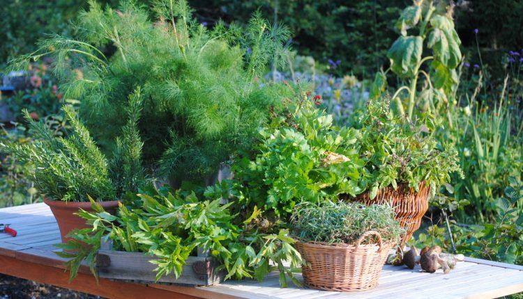 Co zrobić z tymi wszystkimi ziołami jesienią?