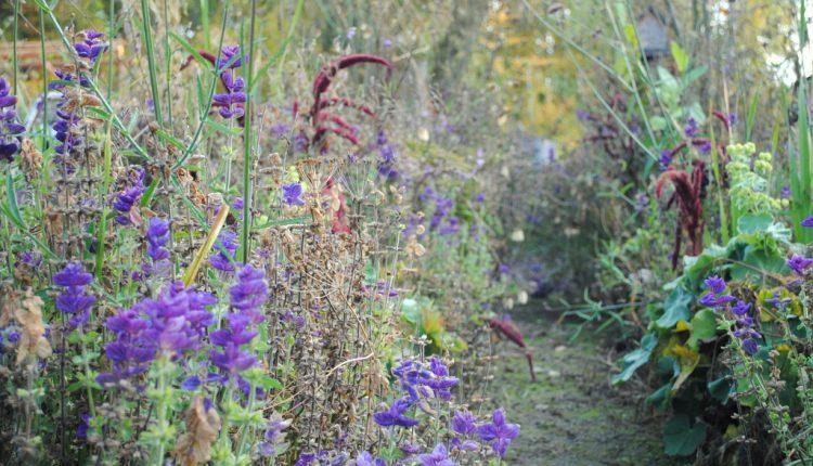 Które kwiaty jednoroczne zdobią ogrody najdłużej?