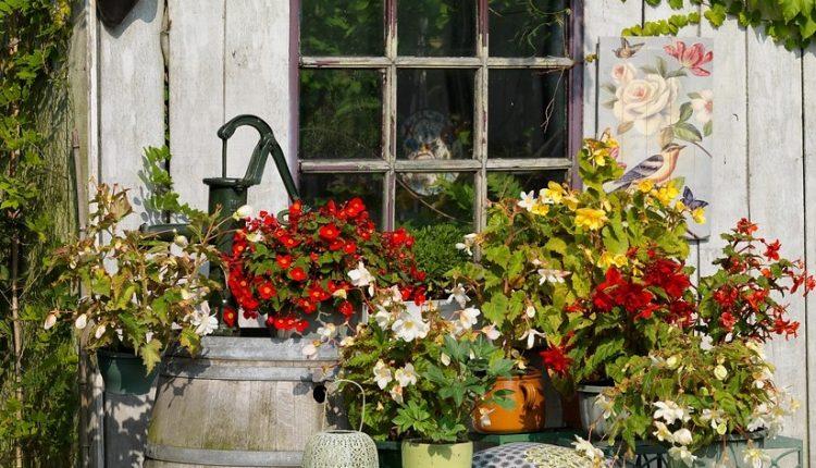Balkon cały w kwiatach (cebulowych)