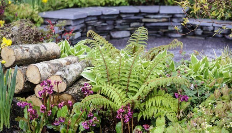 Wystawa ogrodnicza w Cardiff 2014