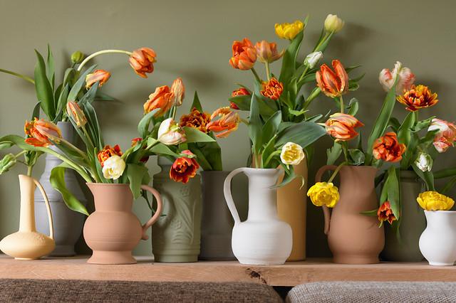 Tulipan jako kwiat cięty