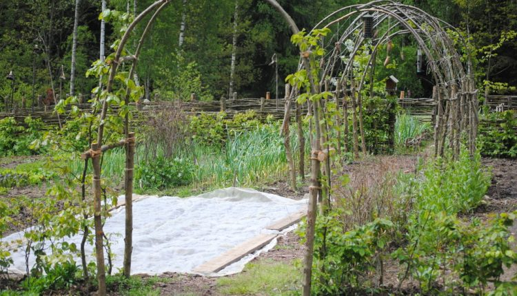 Robimy prosty łuk z leszczyny – krok po kroku