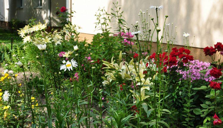 Ogród to jest miejsce wydzielone?