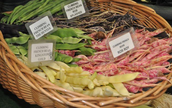 Fasola – jakie odmiany warto mieć w warzywniku