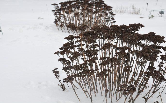 Zabezpieczanie bylin i traw na zimę