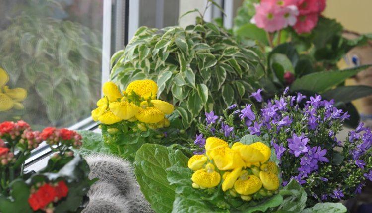 Kwitnący parapet … zimą