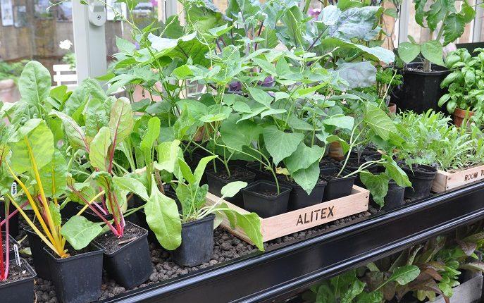 Jakie nasiona można siać najwcześniej?