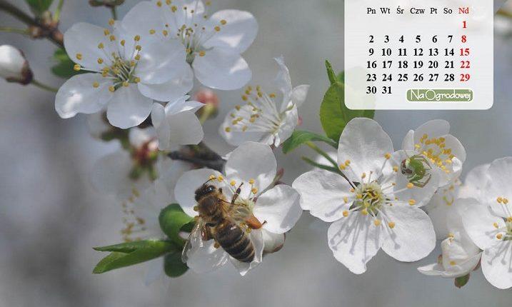Kalendarz na pulpit, marzec 2015