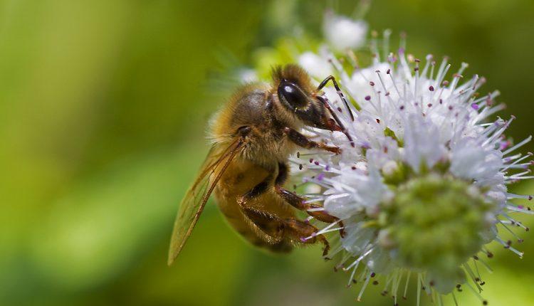 Okiem pszczoły