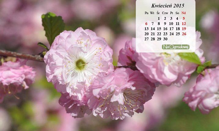 Kalendarz na pulpit, kwiecień 2015