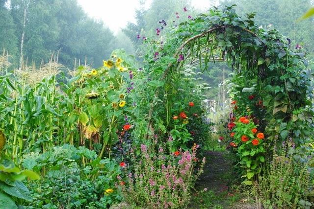 Warzywny ogród wertykalny