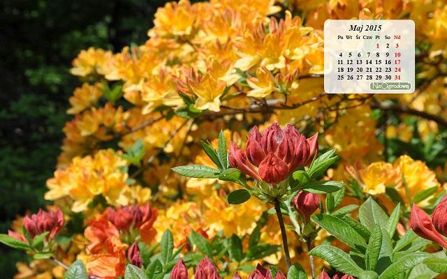 Kalendarz na pulpit, maj 2015