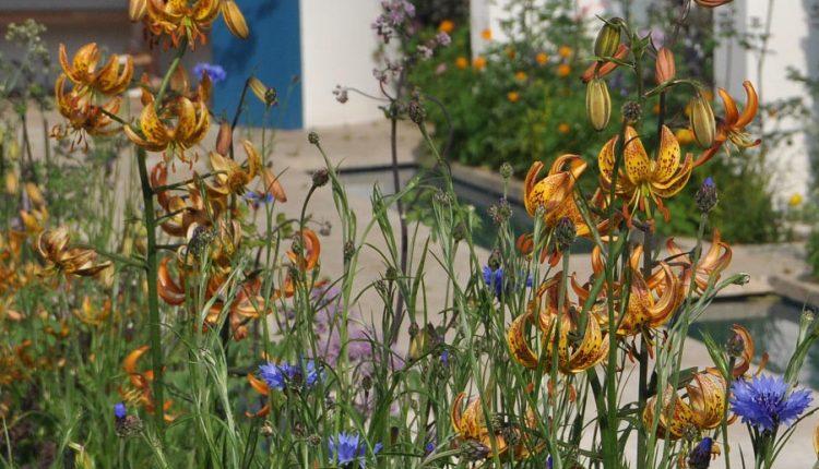 Lilie martagon, delikatne rośliny do naturalnego ogrodu