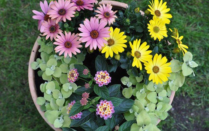 Kwiatowe donice na słoneczny balkon