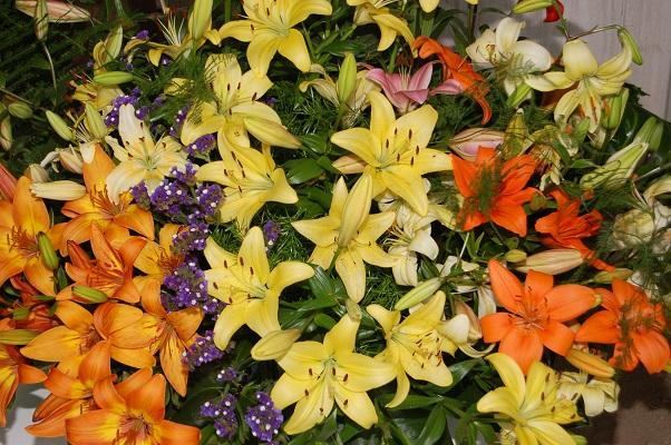 Lilie w tysiącach odmian
