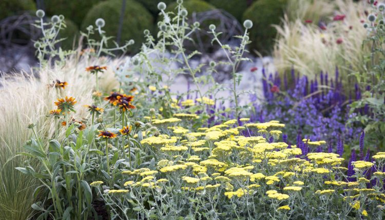 Tatton Flower Show 2015