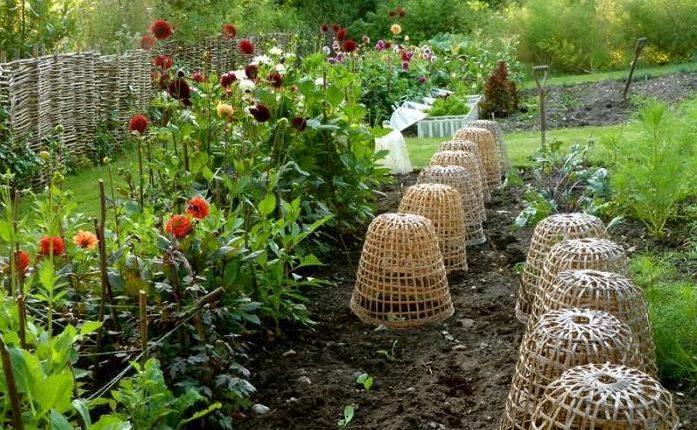 W barwach lata – romantyczny ogród w Dorset