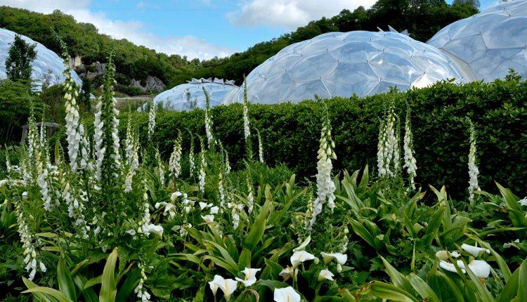 Eden Project to największa na świecie cieplarnia