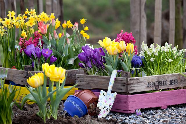 Laureaci konkursu: Wiosenny ogród w kolorach tęczy