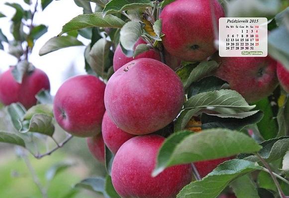 Kalendarz na pulpit – PAŹDZIERNIK