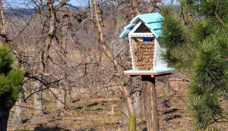 Budujemy domki dla insektów