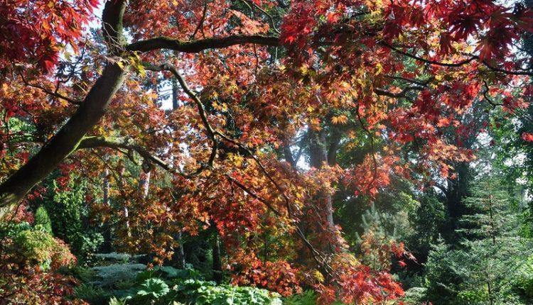 Jesienne arboretum Cotswoldu, Anglia