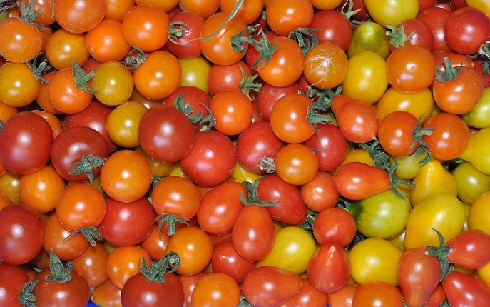 Pomidory koktajlowe – najciekawsze odmiany
