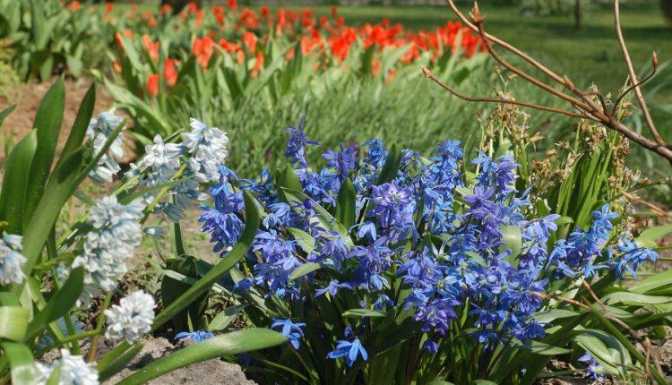 Perełki wiosennego  ogrodu