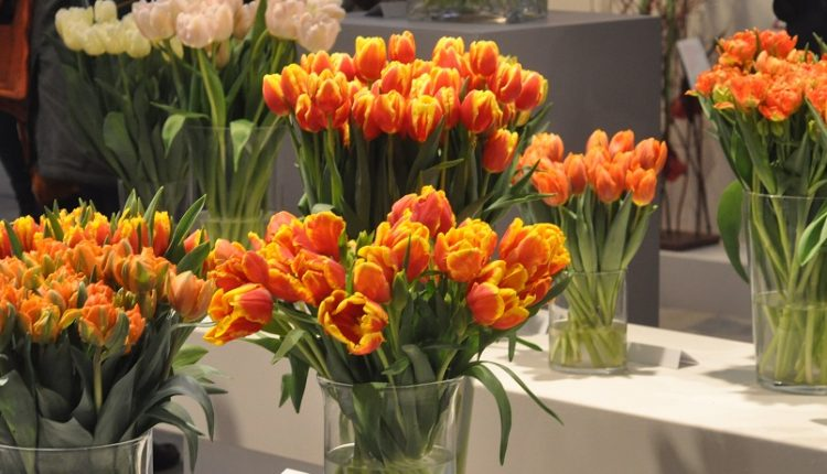 VIII  Wystawa Tulipanów w Warszawie