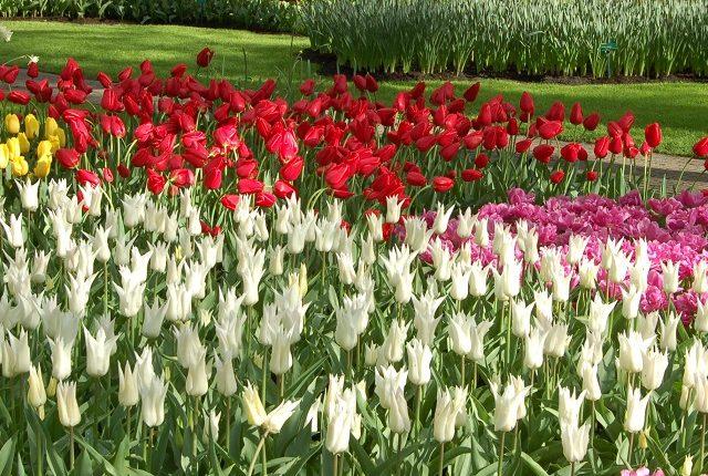 Festiwal Tulipanowy w Ogrodzie Botanicznym w Warszawie