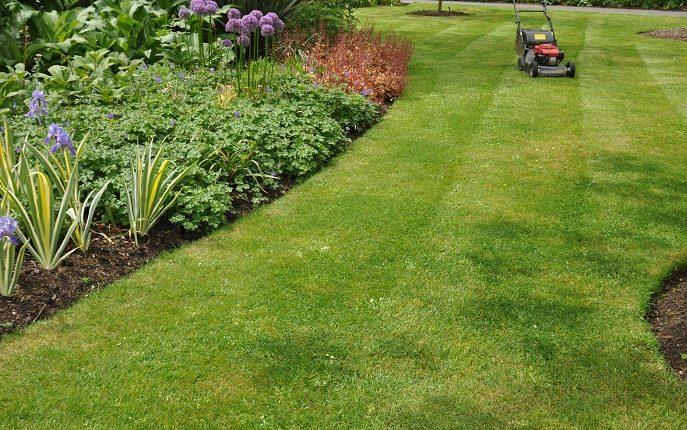 Najpiękniejsze trawniki zakładamy w kwietniu