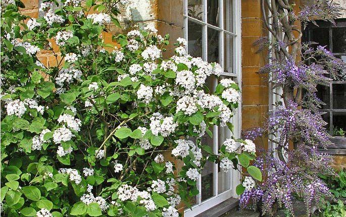 Wiosenne zapachy: drzewa i krzewy