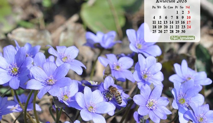 Kalendarz na pulpit – KWIECIEŃ 2016