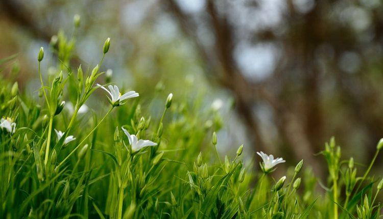 Trawnik po zimie – jak o niego zadbać?