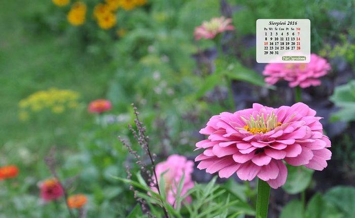 Kalendarz na pulpit – SIERPIEŃ 2016